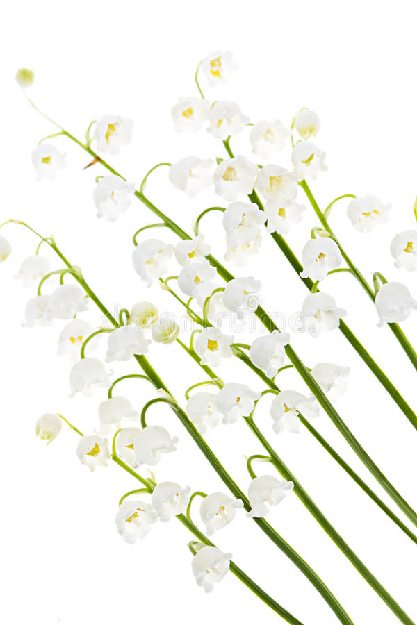 Na biel Lily-of-the-valley kwiaty