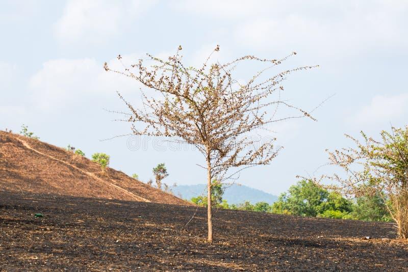 na brand met gebrande bomen stock afbeeldingen
