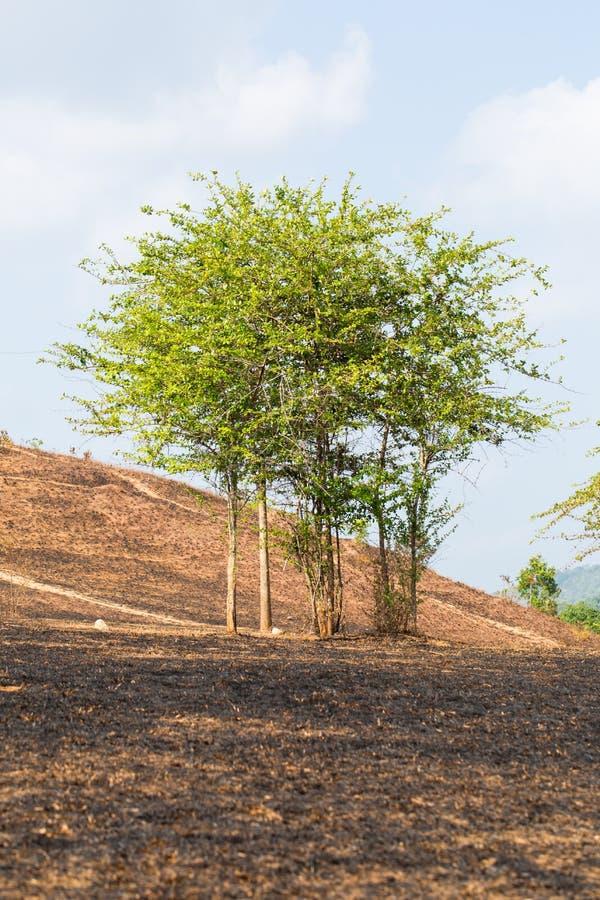 na brand met gebrande bomen stock afbeelding