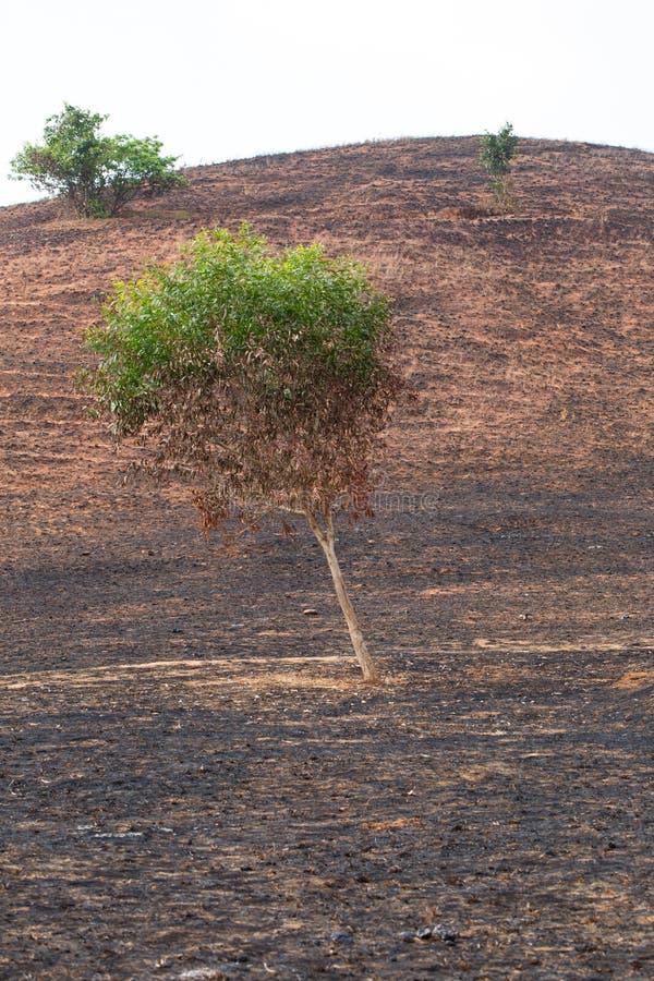 na brand met gebrande bomen stock foto