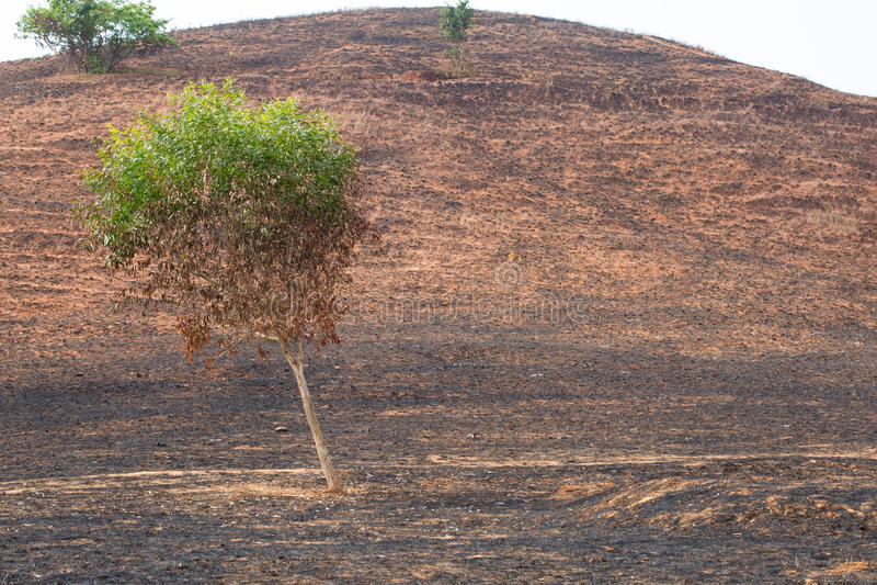 na brand met gebrande bomen stock fotografie