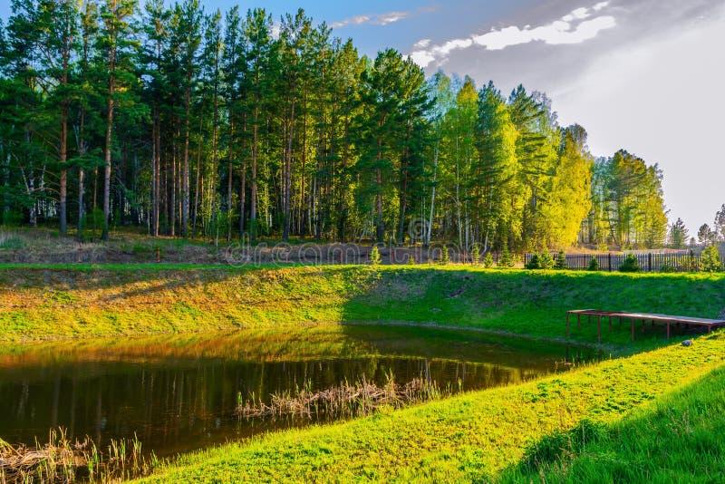 Na brzeg piękny jezioro tam jest zielony las fotografia royalty free