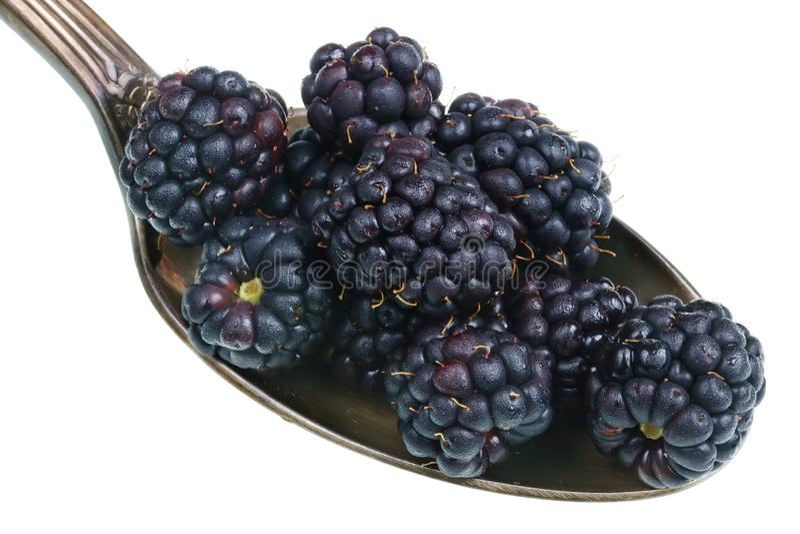 Na colher dourada velha há uma pilha pequena do alimento - macro isolado das amoras-pretas do jardim frutos doces maduros foto de stock royalty free