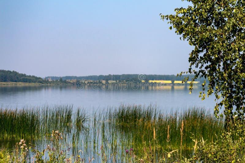 Na costa do lago em um dia de verão imagem de stock royalty free