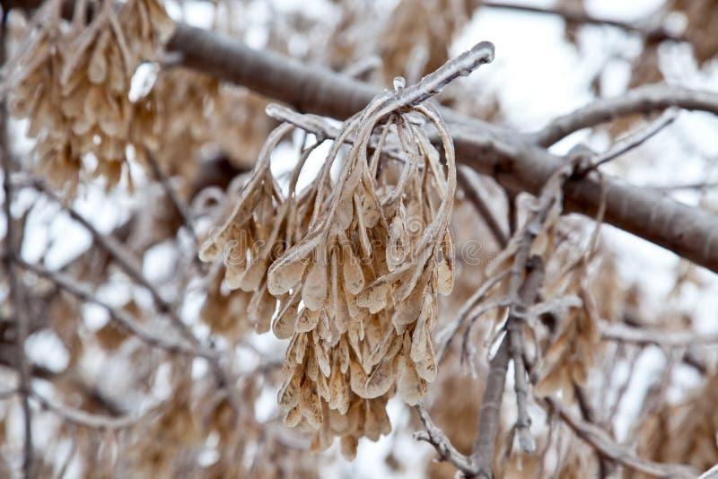 Download Na De De Winter Het Bevriezen Regen Stock Afbeelding - Afbeelding bestaande uit suikerglazuur, nave: 29513973