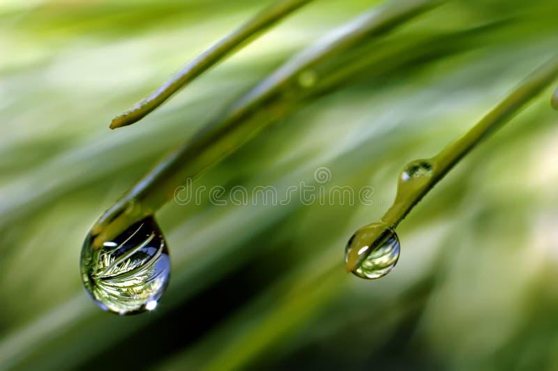 Na de regen? stock fotografie