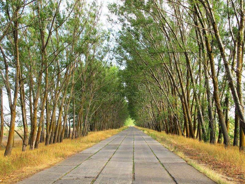 Na drodze strona drzewa zdjęcia royalty free