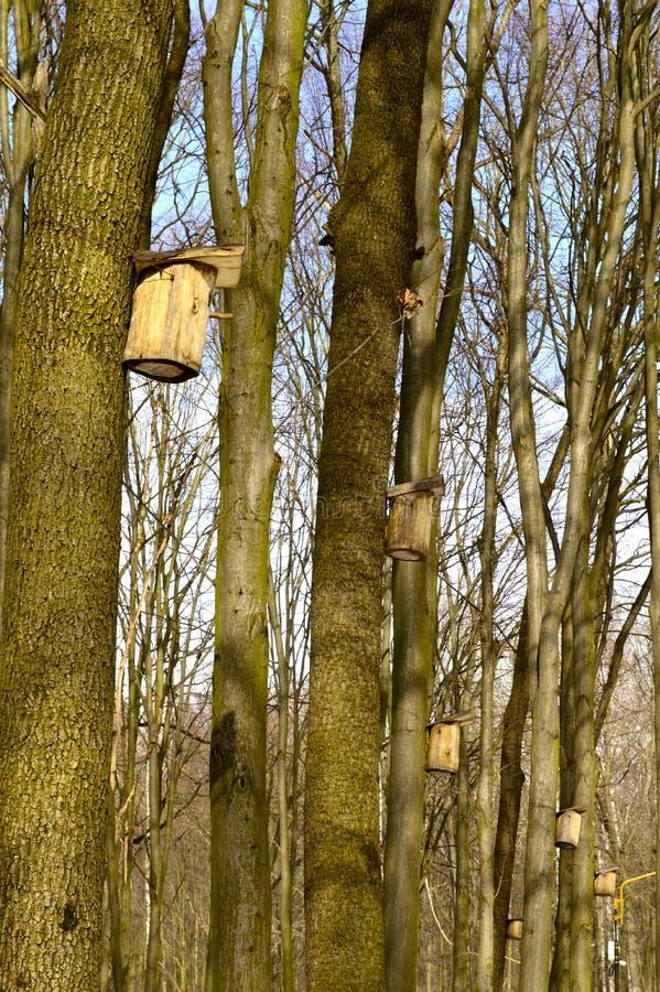 Na drzewnym birdhouse dla ptaków zdjęcia royalty free