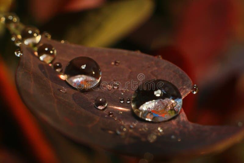Na een de zomerregen Macro foto van waterdalingen royalty-vrije stock fotografie