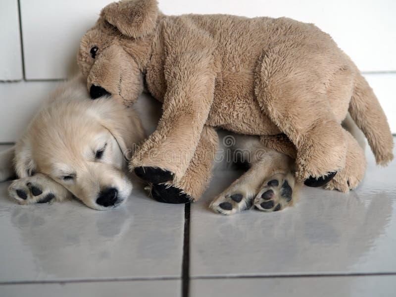Na een goede dag van ontdekkingen en onzin, de kleine puppyslaap met zijn deken royalty-vrije stock fotografie