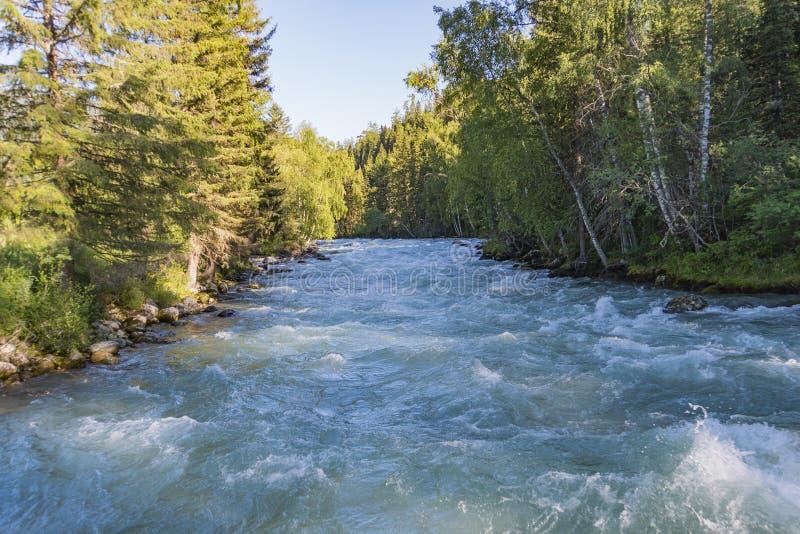 Na een vloed van de bergrivier Altai, Siberië De stromen van de bergrivier tussen de bomen in Siberische taiga royalty-vrije stock afbeelding