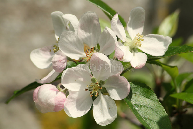Na flor imagens de stock royalty free