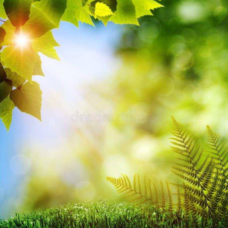 Na floresta. imagem de stock royalty free