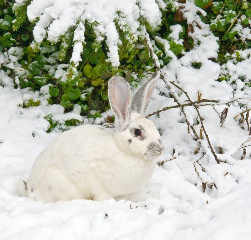 Na floresta do inverno imagens de stock royalty free