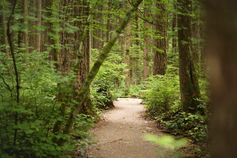 Na floresta do parque pacífico do espírito, Vancôver, Columbia Britânica Canadá imagem de stock