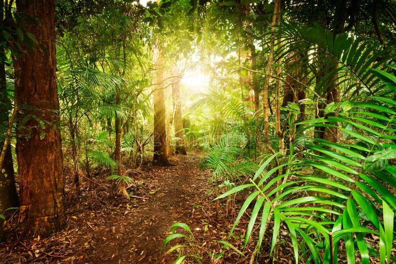 Na floresta húmida australiana fotos de stock