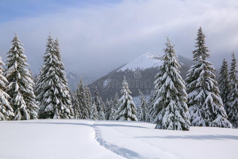 Na gazonie zakrywającym z śniegiem tam jest stratowany ścieżka prowadzi wysokie góry z śnieżnymi białymi szczytami, drzewa w snow fotografia royalty free