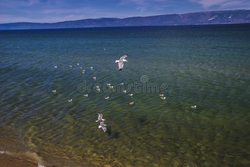 na jeziornym Baikal lecie obraz stock