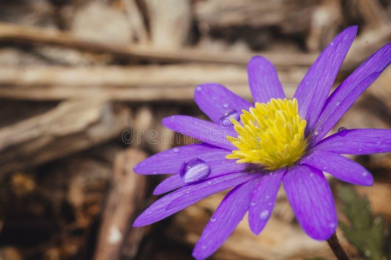 Na kwiacie wodne krople zdjęcie stock