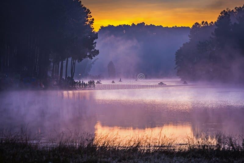 Na manhã, Pang Ung Forestry Plantations, Tailândia imagem de stock royalty free