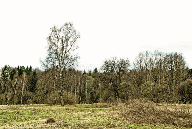 Na miejscu zaniechana wioska w wiośnie w Rosja zdjęcia stock