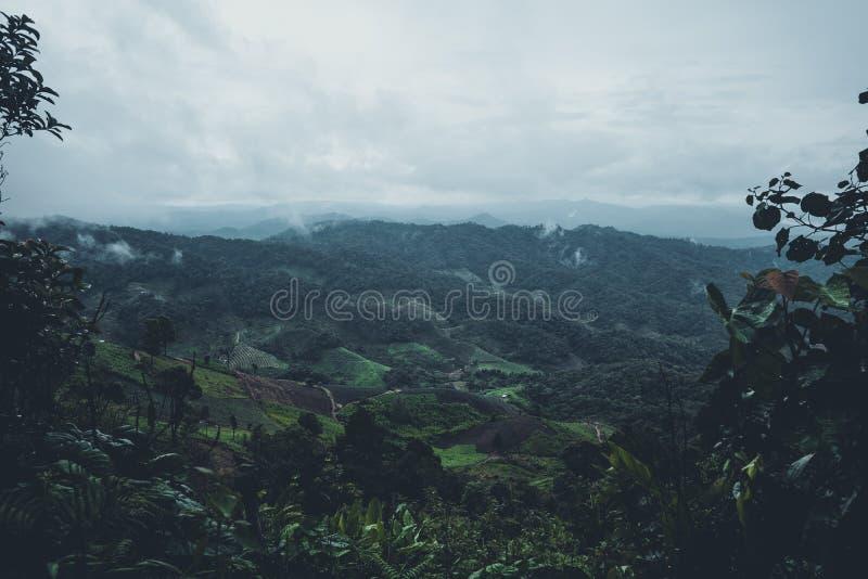 Na névoa e na floresta tropical, escuridão imagem de stock