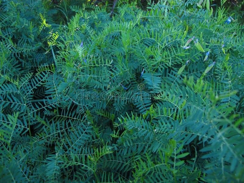 Na naturze, na łąkowej trawy zieleni paproci z kwiatami obrazy stock