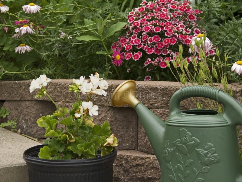 na ogród zdjęcie royalty free