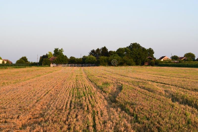 Na oogst, Vojvodina, Servië royalty-vrije stock fotografie