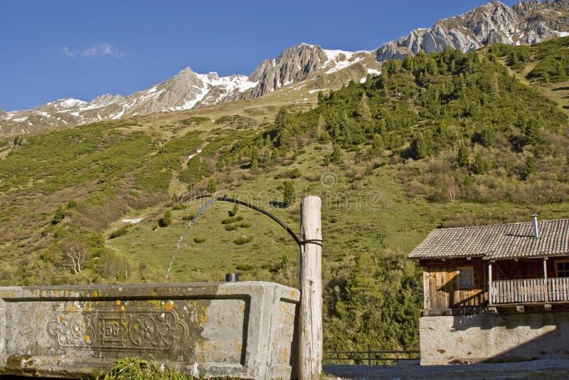 Na paśniku w Południowym Tyrol zdjęcia stock