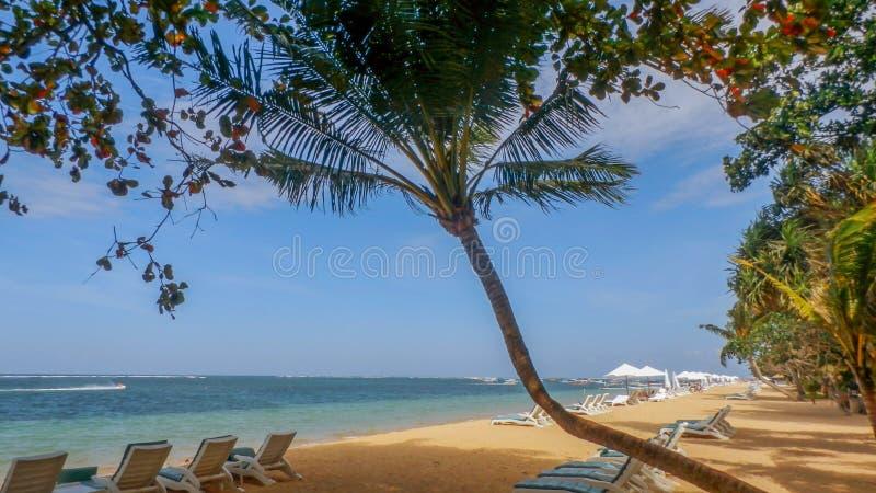 Na plaży kokosowy drzewo obraz royalty free