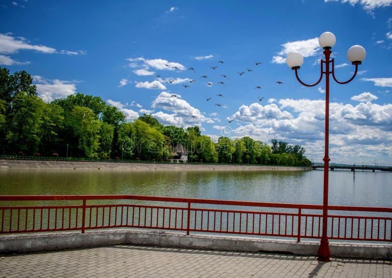 Na początku lata w pięknym parku Woda, niebieskie niebo, zielony las i lampion, zdjęcie royalty free