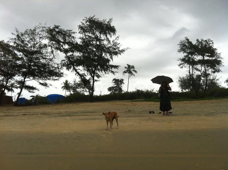 Na praia de Cavelossim, Goa imagem de stock royalty free