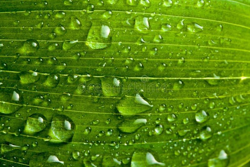 Na roślinie wodne krople obrazy royalty free