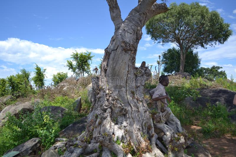 Na safari w Zimbabwe obraz stock