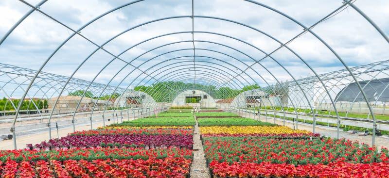 Na Wolnym Powietrzu szklarnia Z kwitnienie kwiatami zdjęcie royalty free