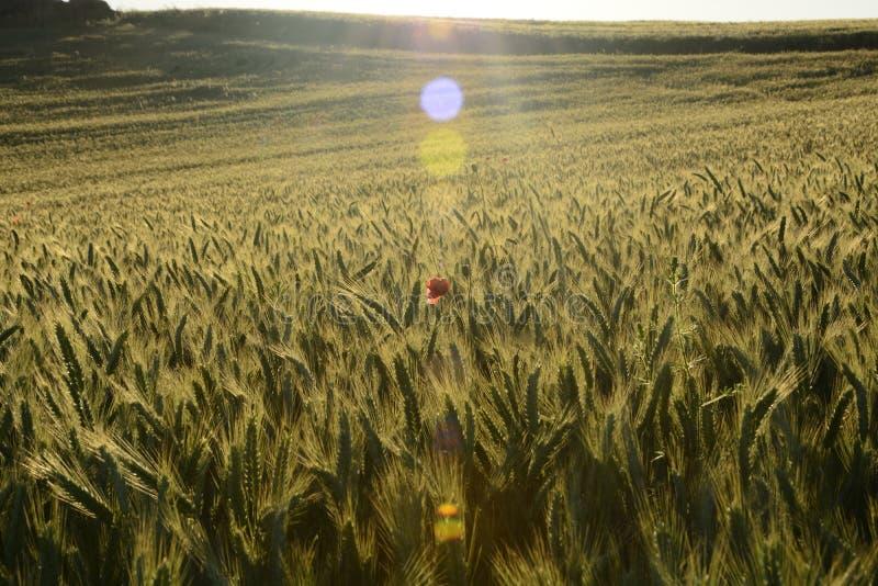 Na zewnątrz miasta pole - wiejski krajobraz - zdjęcie stock