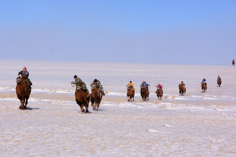 Download Naadam camel racers editorial stock image. Image of mongolian - 19026344