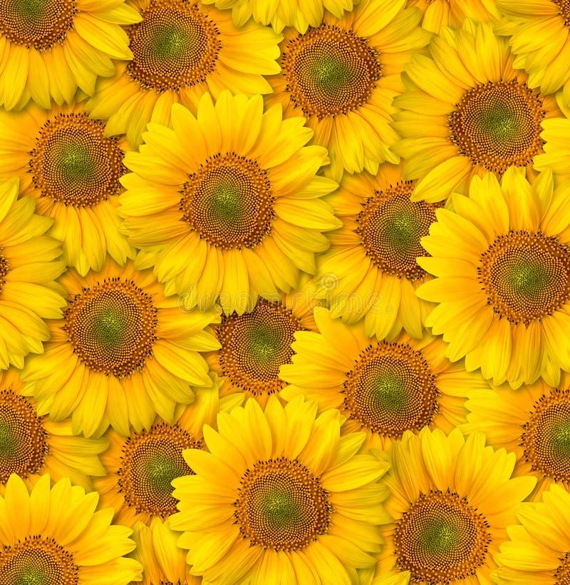 Naadloos BloemenPatroon Chaotische regeling van bloemen Decorat stock afbeelding