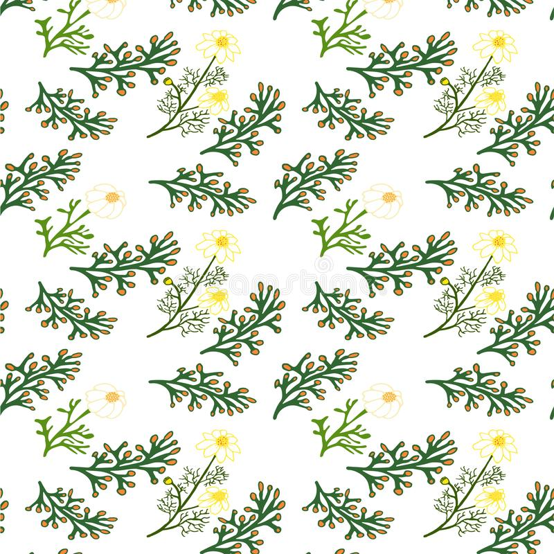 Naadloos BloemenPatroon Geïsoleerdee vectorillustratie vector illustratie