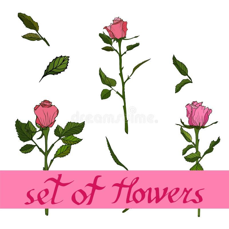 Naadloos bloemenpatroon met rozen Bloemen vectorillustratie stock illustratie