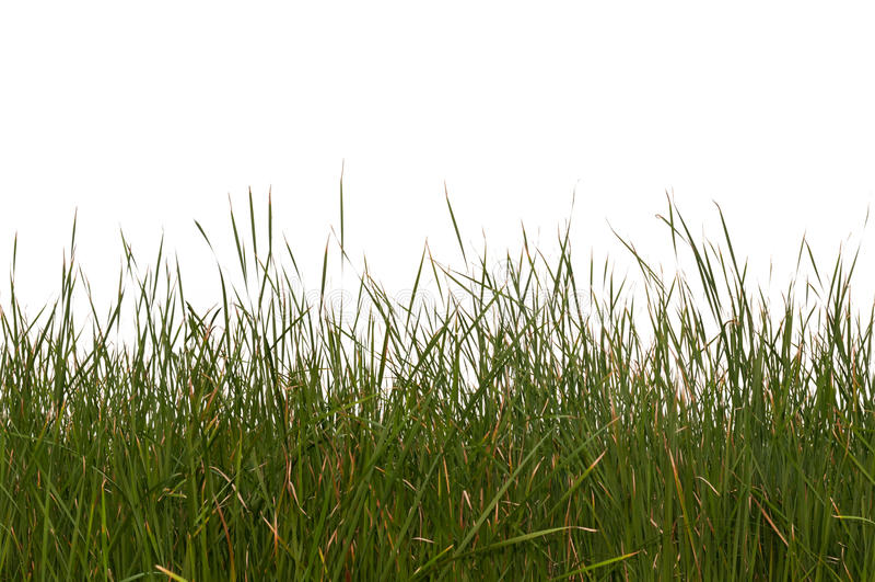 Naadloos Geïsoleerd Gras