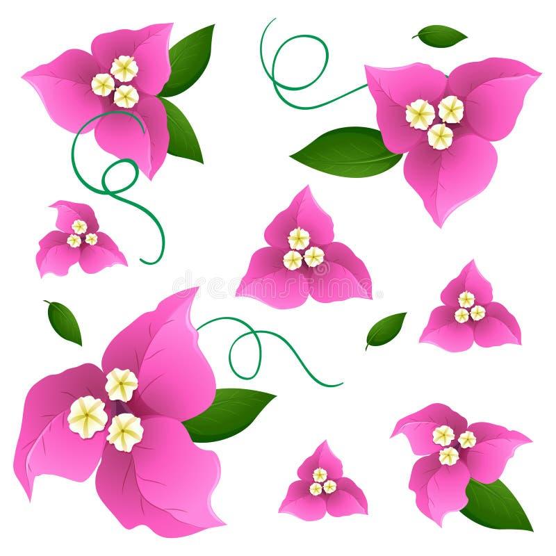 Naadloos ontwerp als achtergrond met roze bougainvilleabloemen royalty-vrije illustratie