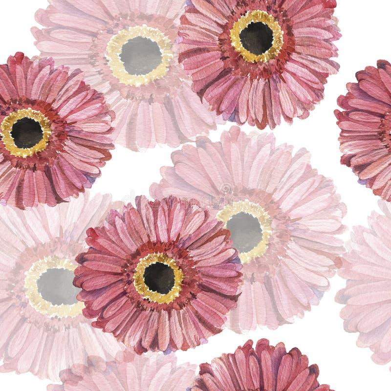 Naadloos patroon met de roze bloemen van het gerberamadeliefje De illustratie van de waterverf vector illustratie
