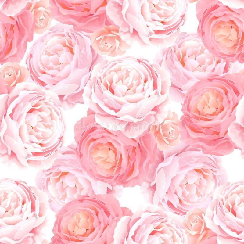 Naadloos patroon met de roze rozen van de elegantiekleur stock illustratie