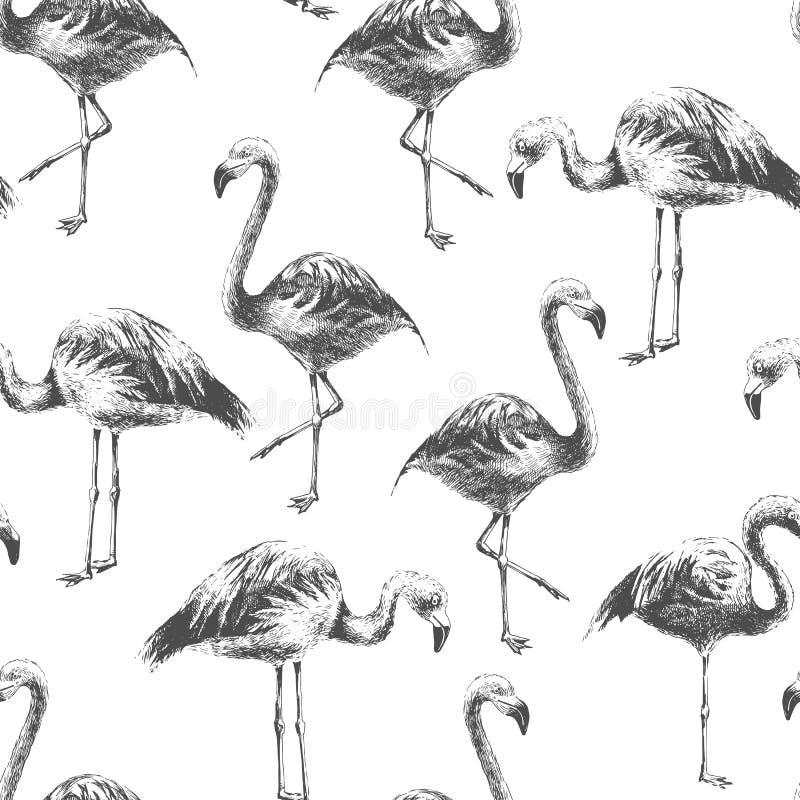 Naadloos patroon met getrokken hand flamingoes vector illustratie