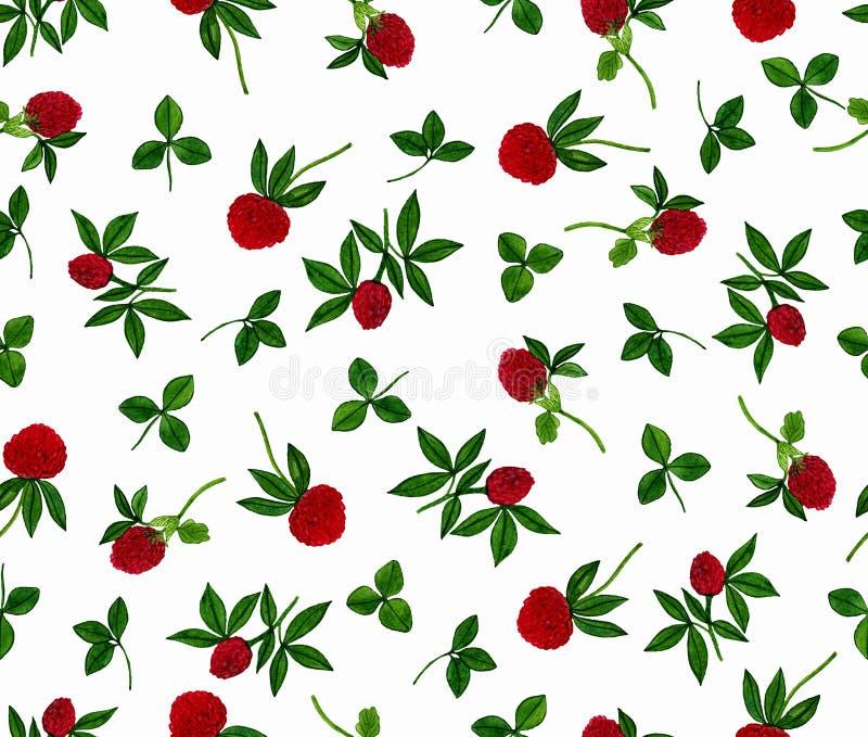 Naadloos patroon met klaverbloemen op een witte achtergrond Geschilderde Watercolourhand stock illustratie