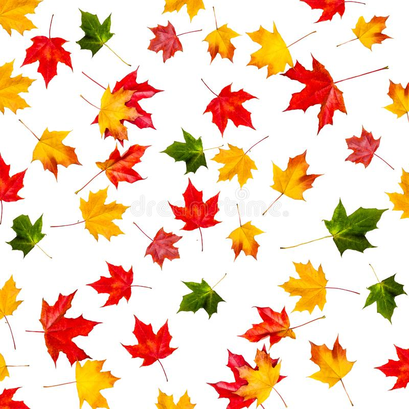 Naadloos patroon met kleurrijke de herfstbladeren Abstracte daling terug stock fotografie