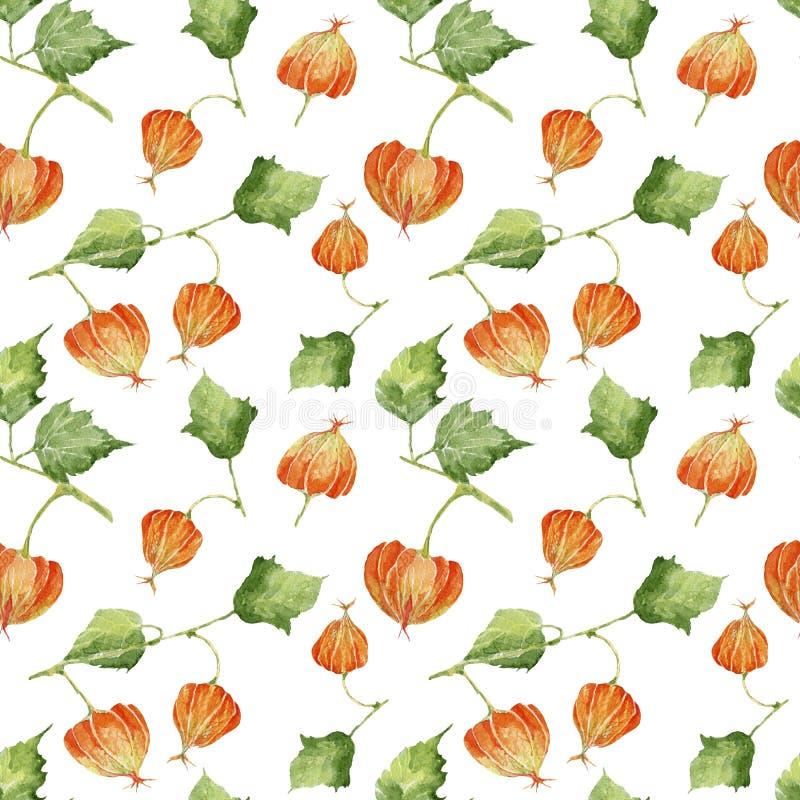 Naadloos patroon met kleurrijke physalis royalty-vrije illustratie