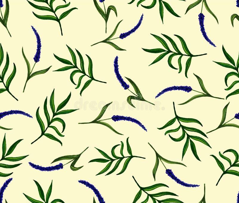 Naadloos patroon met lavendelbloemen Geschilderde Watercolourhand royalty-vrije illustratie